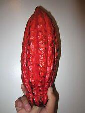 "24 - 30"" TALL FLORIDA Theobroma Cacao Cocoa Chocolate Tropical Fruit Tree Plant"