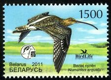 2011. Belarus. Bird of the year. Eurasian Curlew. MNH. Stamp