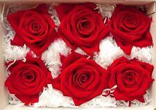 ROSA Rossa Stabilizzata 6pz  ROSE rosse disidratate stabilizzate