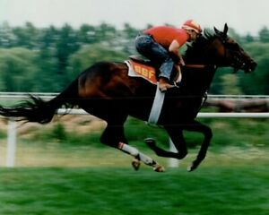 DANCE SMARTLY 8X10 PHOTO HORSE RACING PICTURE AM WORKOUT