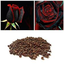 200 True Blood Rare Black Rose Seeds, Rare Amazingly Beautiful Black Roses s