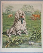 POODLE DOG VICTORIAN BOY ANTIQUE LITHOGRAPH DOG ART PRINT 1867