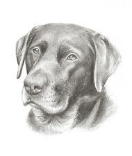 "8 x 6"" Custom Pencil Pet Portrait - any pet drawn from your photos"