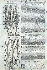 Eufrasia Cizaña Raíces Botánica Matthioli Mattioli Matthiole Dioscorides