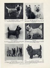 Cairn Terrier examples 8 Named Champions Dogs Vintage Dog Art Print 1934 Named