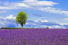 STUNNING LAVENDER FIELD IN PROVENCE CANVAS #383 WALL HANGING PICTURE ART A1