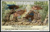 Nesting Dwarf Chameleon Fish c50 Y/O Vintage Trade Ad  Card