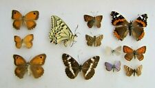 MIXED LOT OF 12 BRITISH & EUROPEAN BUTTERFLIES FOR ARTISTS OR FRAMERS