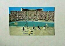 1958 Marineland of the Pacific Seal Arena Palos Verdes California PC Postcard