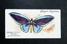 Troides Birdwing  Butterfly      Vintage 1930's Colour Card