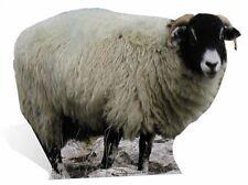 SHEEP - LIFESIZE CARDBOARD CUTOUT / STANDEE / Standup