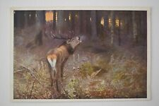 Postcard Art Stag Deer Calling in Forest Scene Unposted