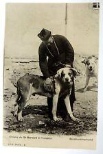 Vintage Early 1900's Postcard, St. Bernard Dogs - Unused