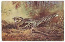 xc animals birds postcard bird animal nightjar