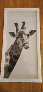 Brand New Giraffe White Frame Picture Canvas 20x 40cm Black & White