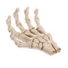 Resin Skelett Hand Modell Figur Handskelett bewegliche Knochenteile Anatomie