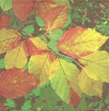 2 Serviettes en papier Automne Decoupage Paper Napkins Autumn Colours