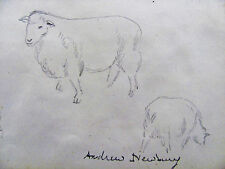 ANDREW NEWBURY - SHEEP - ORIGINAL DRAWING C.1940 - FREE SHIP IN US   !!!