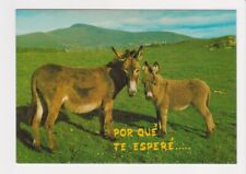 Bonita Estampa Costa del Sol Por Qué Te Esperé shows A Donkey and Baby postcard