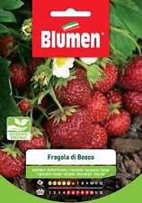 Blumen Semi di Fragola Di Bosco Semi Fragole Di Bosco - 1 cfz