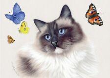 Ragdoll  Cat Greeting Card Seal Point Beauty from Art by Irina Garmashova