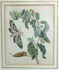 Originaldrucke (bis 1800) aus Europa mit Blume & Pflanze