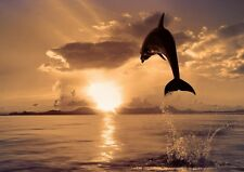 Dolphin Sunset Beach Sea Photo Poster Print ONLY Wall Art A4
