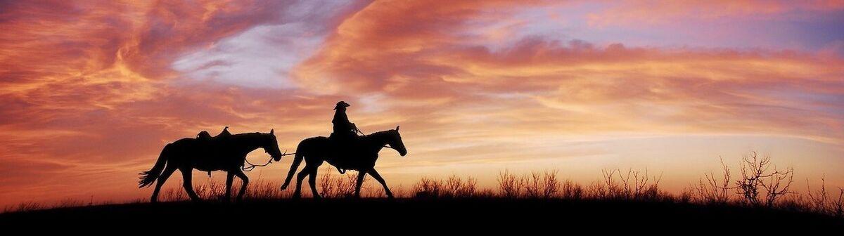 TACK4HORSES