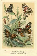 Schmetterlinge, deutsche, altkolorierte Lithographie von 1882