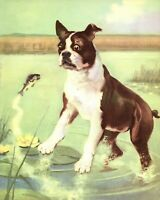 Antique BOSTON TERRIER Print Wesley Dennis Dog Art Illustration 3576-H