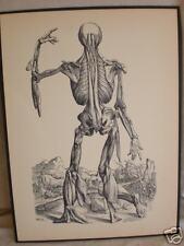vintage MEDICAL PRINT human ANATOMY legs THE FINGER arm