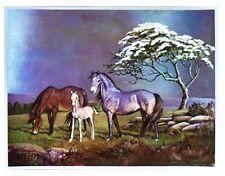 Indianer Alu-Bild Pferde, Pferd Western Reiter Cowboy Saloon Deko,16x21 Alubild