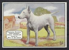 1938 UK Dog Art Photo Hand Colored Ardath Cigarette Card WHITE BULL TERRIER