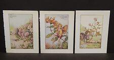Flower Fairies Cicely M. Barker 3 Prints  c1940 G1#07