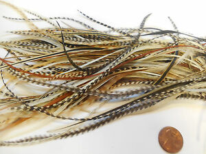 100 WHITING METZ  ROOSTER SADDLE HACKLE FLY TYING FEATHERS ASST grizzly dun etc.
