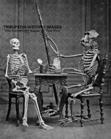 1878 Vintage Human & Gorilla Skeletons Posed * 8x10 Photo * Weird Odd Bizarre