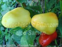 🔥 🌶️ Pusztagold Paprika aus Ungarn frühe Sorte 10 frische Samen Balkon Kübel