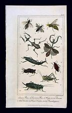 1822 Davenport Print - Bees Wasp Locust Mole House Cricket Grasshopper - Insects