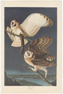 Audubon Amsterdam Ed Double Elephant Folio lithograph Pl 171 Barn Owl