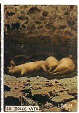 3 petits cochons la dolce vita  L.BUFFIER