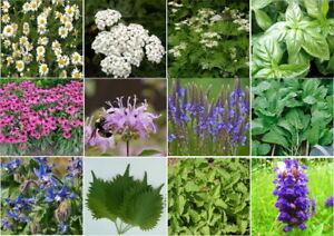 12 Pack Medicinal Herb Kit 1200 Seeds