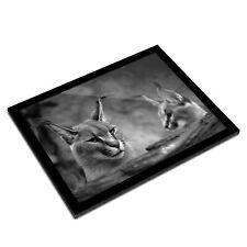 A3 Glass Frame BW - Caracal African Lynx Cat  #38979