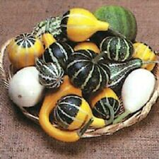 Gourd Seeds Small Mix gourds 25 seeds