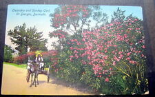 Bermuda St. Georges Oleanders And Donkey Cart