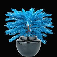 RARE 100x Blue Cycas Seeds , Sago Palm Tree Beeds Bonsai Blower Seeds PRO UK