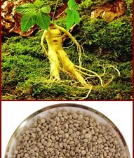 30 Seeds Chinese hardy Panax Ginseng Seeds