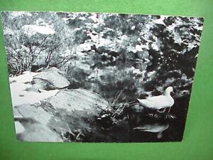 "1971 Art Photo 7""x9"" Black & White Mounted Photograph Duck in Snow Rhode Island"