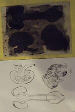 Ancien Tampon Scolaire Anatomie Organe  14 x 19cm