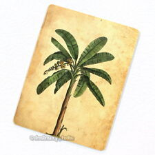 Banana Palm Tree Deco Magnet, Decorative Fridge Antique Botanical Illustration