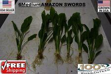 6  Medium amazon sword Plant  Easy Aquarium aquascaping planted tank easy